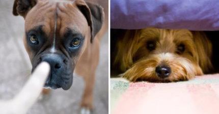 「對狗狗大吼」會傷害到牠!只要「換種方式」就能讓毛孩學更快