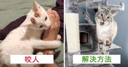 4個「貓咪一直咬你」的真正原因 牠在「表達很開心」但換個方式就能避免!