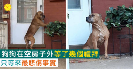 在「空房子外」傻傻堅守幾個禮拜!志工哭著「向狗狗解釋」:已經不在了
