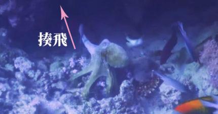 影/一拳章魚!跟魚組隊「一言不合就揍飛」 無辜隊友:不能好好說話?