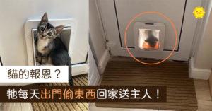 呆萌小貓「露出真面目」 每天出門「騙禮物」沒人知道誰給的!