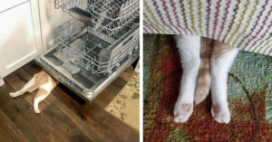 每次想找貓皇都「只剩下半身」?主人爆料:牠以為沒人發現!