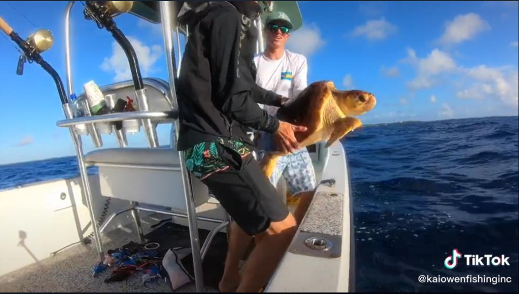 救救我!發現「海龜驚恐求救」 他「抱起」後心驚:再晚幾秒就悲劇了