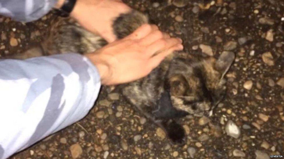 醉男「抓貓當武器」跟警察對峙 牠「幫自己報仇」比被判刑還慘