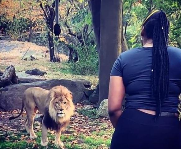 怪女自稱「獅子投胎」直接跳進猛獸籠...台灣動物園也發生過!