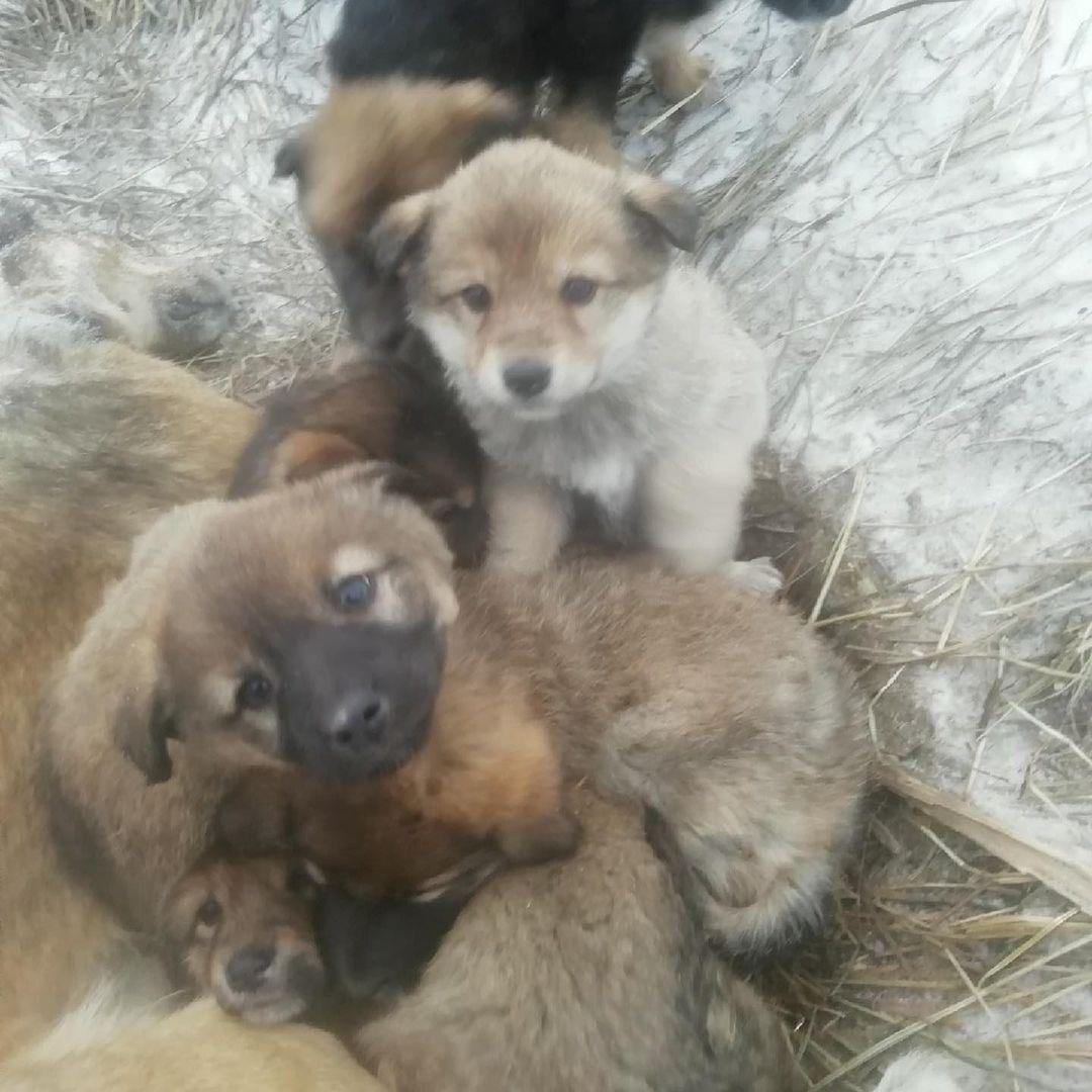 20度「用生命發熱」保護寶寶 狗媽凍成冰柱...孩子被救援不肯走!