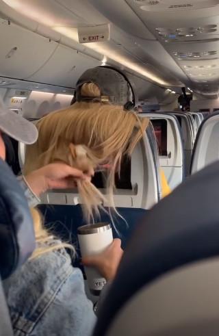 缺德乘客「長髮遮電視」她氣炸 立刻回敬「甜食報復」網兩派吵翻
