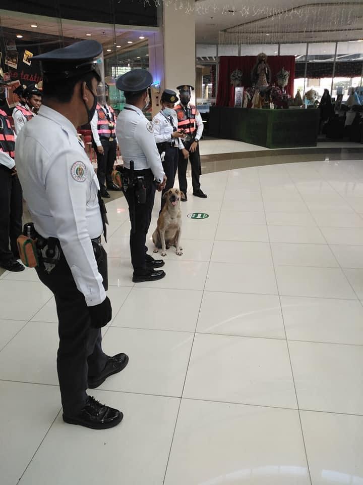 萌浪浪闖進百貨公司...誤打誤撞直接「升級變警衛」訓練人類