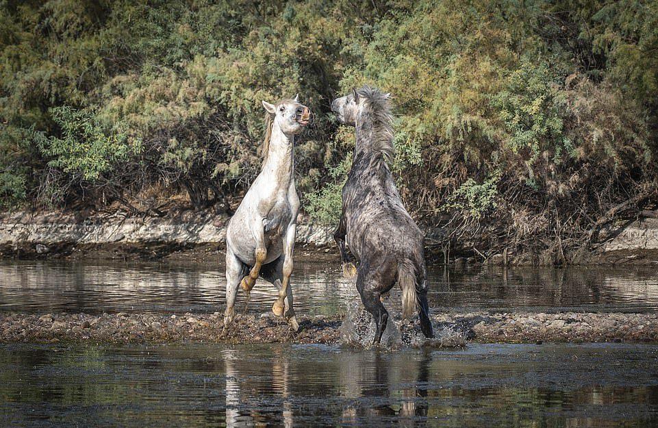 牠是我的女人!超壯公馬「約河岸單挑」...3分鐘馬上解散