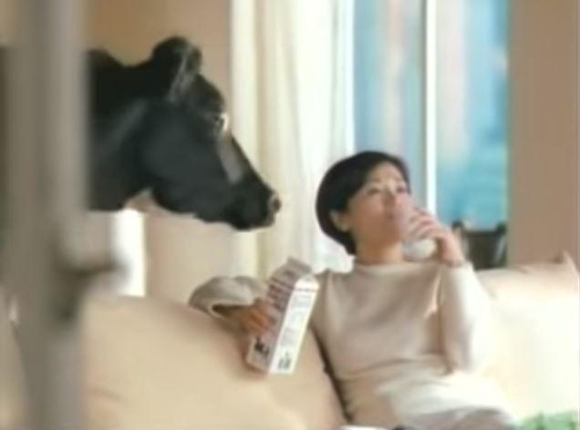 林鳳營廣告?帥妹一起床「跟牛對到眼」...就像家裡養了一頭牛!