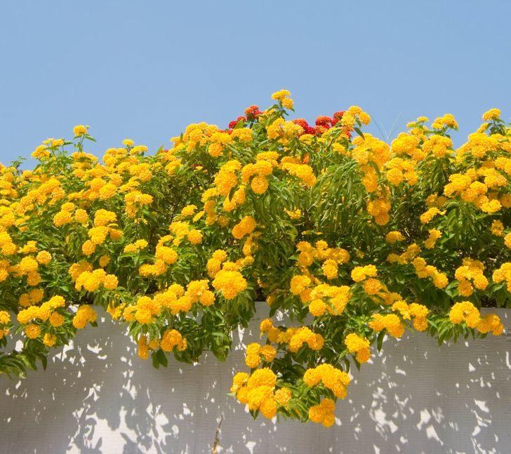 15種「懶人也種不死」的新手必選植物 「不用每天顧」也能活百年?