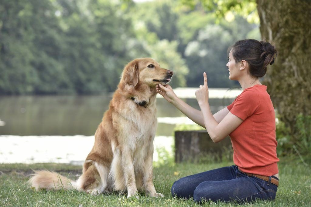 人類別再幫狗腦補!研究發現:牠真的聽不懂你在說什麼