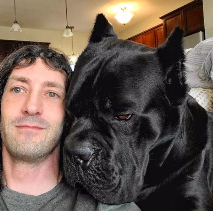21隻「以為自己是小狗」的巨大汪星人 爽躺身上...主人快缺氧了啦!