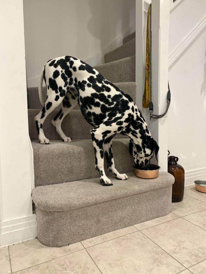 22張「你的狗還好嗎?」的故障狗狗照 黑狗跑進雪地...就能參加時裝周!