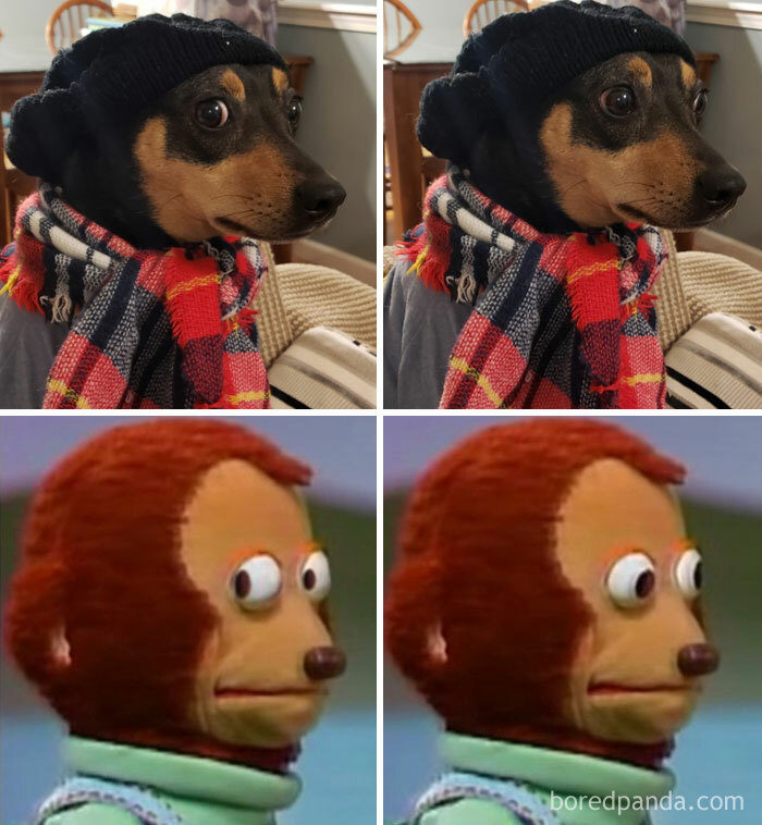 狗像其他東西