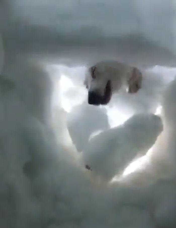 被埋在雪下很無助 這時「最萌救援員」帶來希望:偶來幫你了!