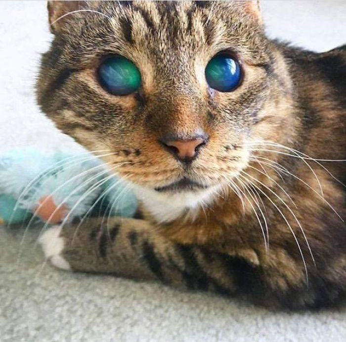 20張「上帝也沒有預想到」的驚奇畫面 擁有「索倫之眼」的貓貓