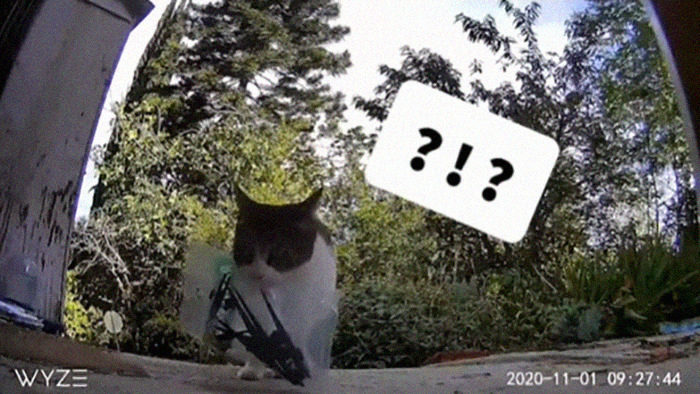 神偷貓星人「每天帶贓物回家」壞到爆紅 主人幫牠改名叫「中國」