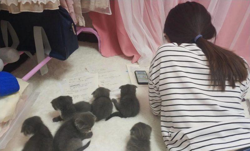 她趴在地上讀書「越來越重」 驚覺背上長出「一排貓背後靈」!