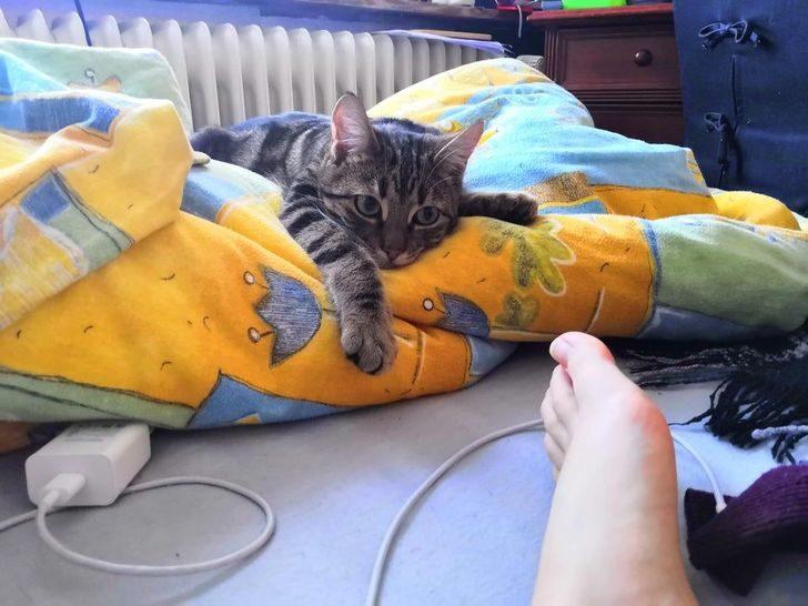 教貓不咬人