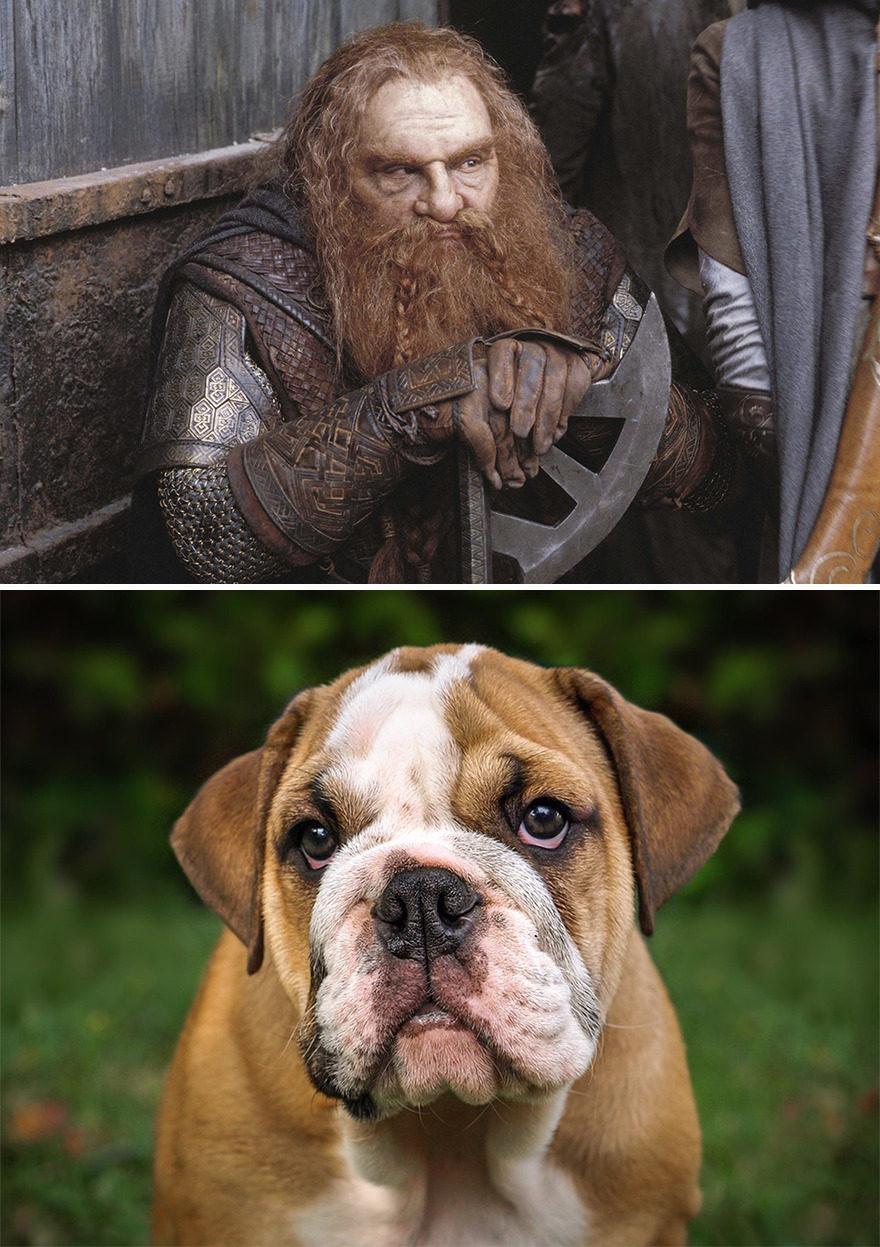 魔戒角色擬狗