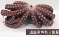 下鍋前發現「這隻章魚9隻腳」 緊急送驗:牠特殊能力失常!