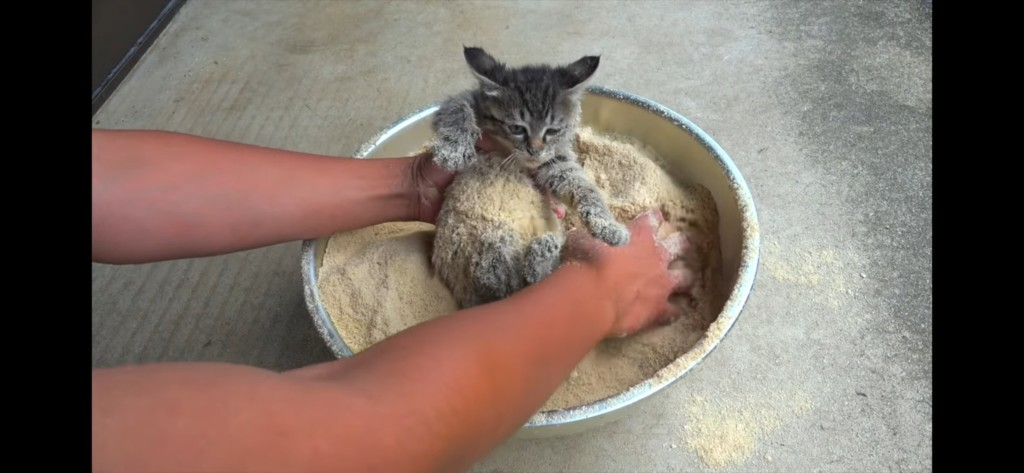 看到「貓貓天婦羅裹粉」被罵翻 原PO急澄清:其實在救牠!