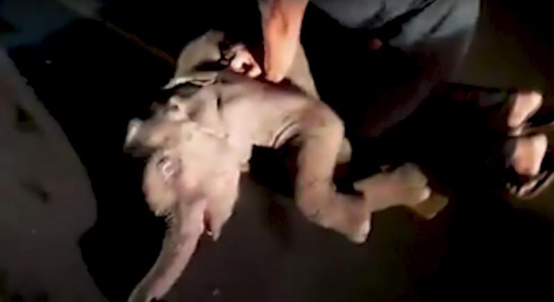被車撞路人幫CPR 垂死小象「聽媽媽聲音」努力站起...死神收回決定!
