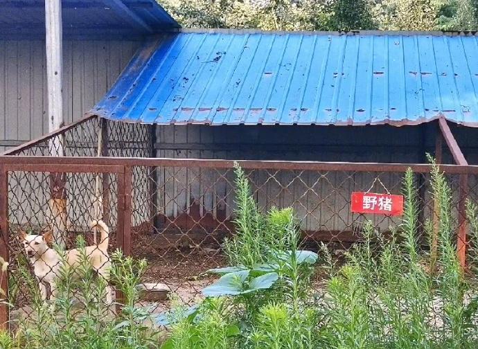 中國「最敷衍的動物園」收費25元 網:這養雞場吧