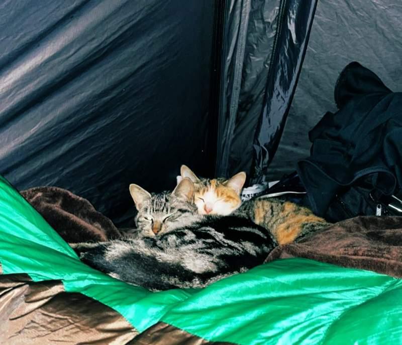 露營深夜「突然被壓床」嚇醒 他不信邪「硬要拍照」:超毛生物!