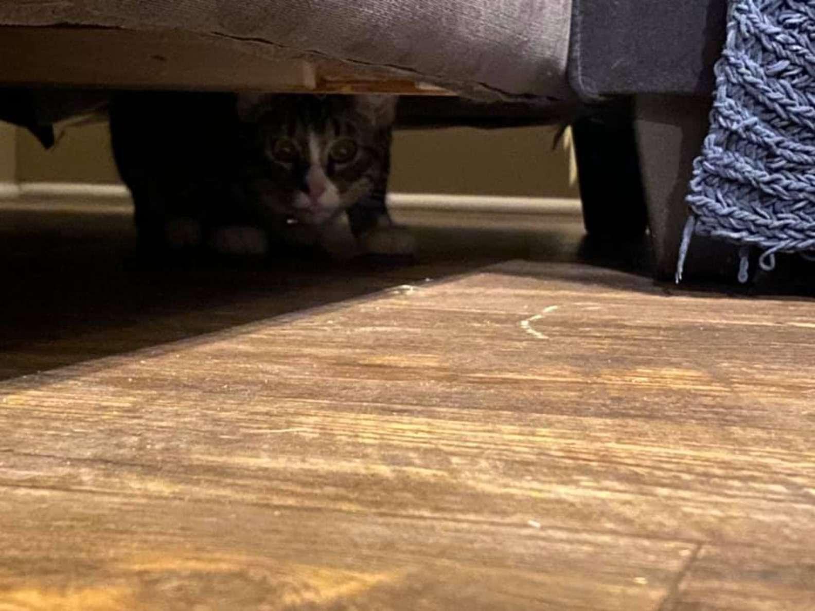 買二手沙發後「狗狗突然狂吠」 仔細查才發現「最萌偷渡客」盯著她!