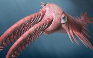 世界上最老的大型掠食者「奇蝦」:長得可愛卻在「武力競賽」勝出