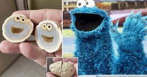 石頭打開...裡頭住兩隻「餅乾怪獸」!還爽賺200萬