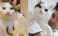 「假笑貓」真有其貓不是P圖 帥主人曝光「幼貓照」從小就會禮貌笑!