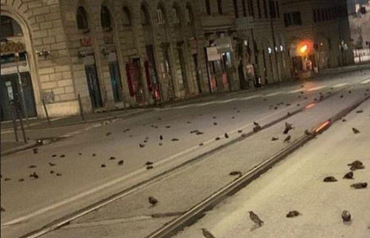 跨年夜「數百小鳥遺體」佈滿街頭 專家怒揭原因:被人類活生生害死