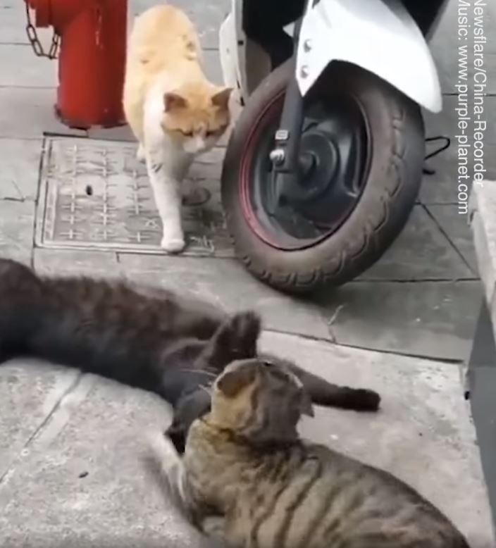 影/渣貓「偷情」被元配抓包 閃現「貓生跑馬燈」:我先溜了,掰