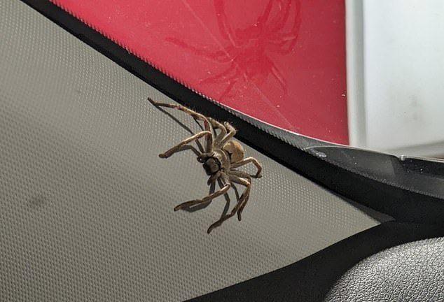 滅掉蜘蛛媽以為沒事 隔天「整台車被佔領」無數後代來復仇!