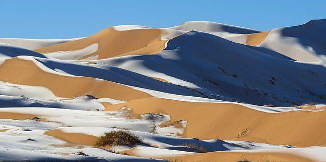 氣候大亂!超熱撒哈拉沙漠「下雪」  他拍下極詭異「駱駝配雪景」