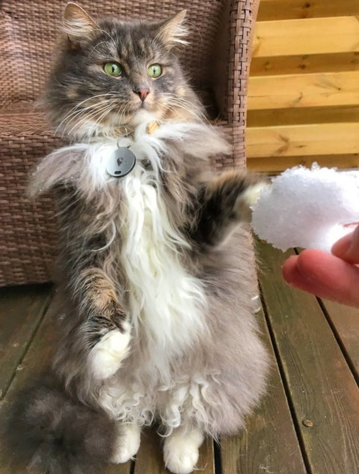 16隻毛孩「下雪初體驗」爆笑反應 貓貓首次吃雪「顏面大崩壞」