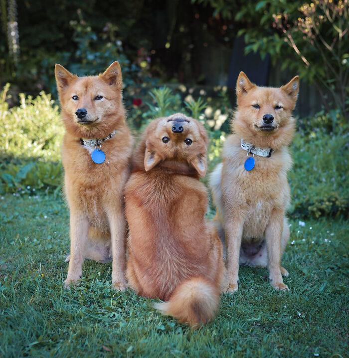 搞怪小獵犬最愛「Cosplay大法師」 「超標準下腰」每張照片都不放過!(15張)