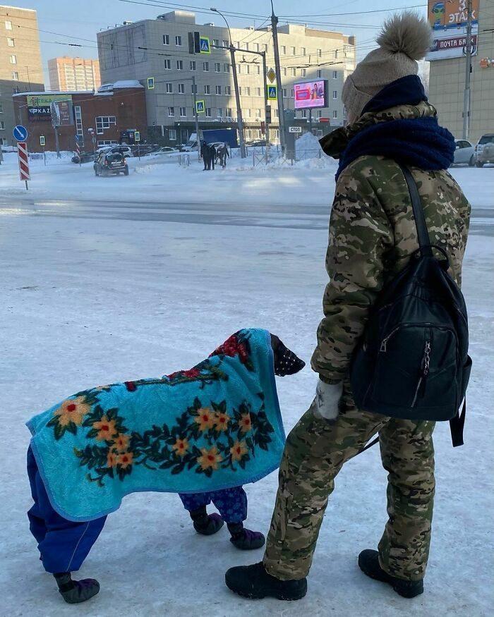 30張建議「躲在被窩看」BOSS級冬天照 狗狗「保暖奇裝」光看就打寒顫