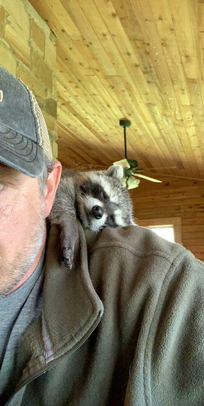動物上肩膀