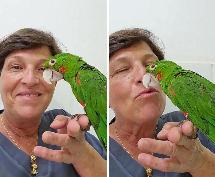 鸚鵡嘴巴不見了  她手作人工版...現在「用嘴巴走路」也完全沒問題!