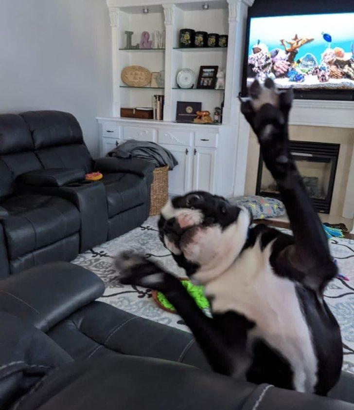 20張讓你「笑出豬叫聲」的毛孩萌照 有牠在你別想看電視!