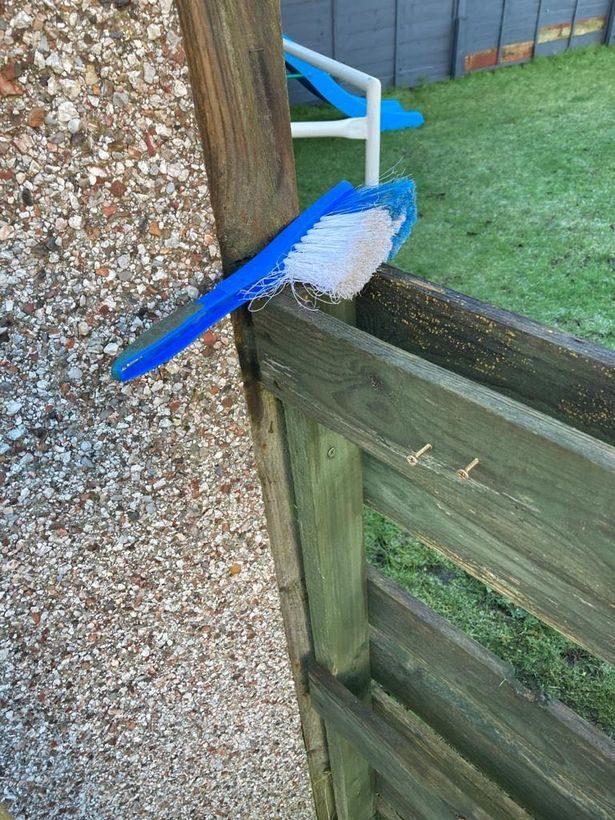 藍白色鳥鳥