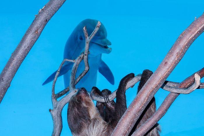 第一次看到樹懶 海豚被萌到「姨母寵溺笑」嗨到轉圈圈:這生物好怪!