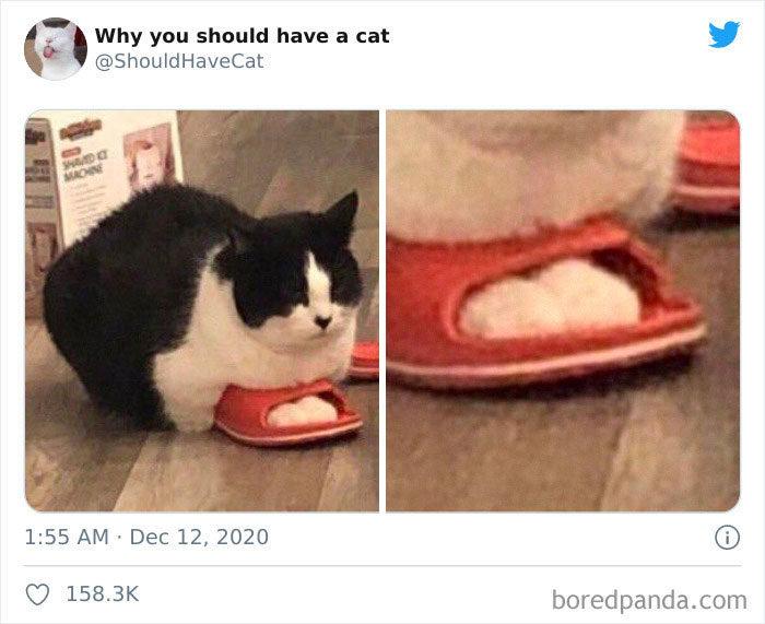 該不該養貓