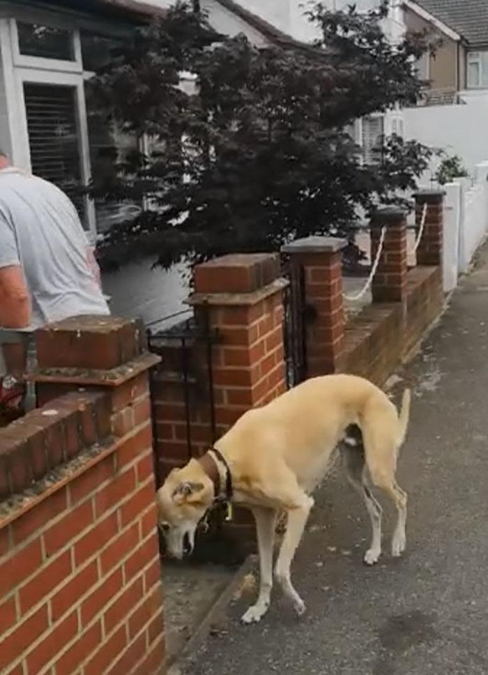 狗狗一拐一拐的!花1萬元看獸醫「根本沒病」 網看「受傷主人」瞬間懂了