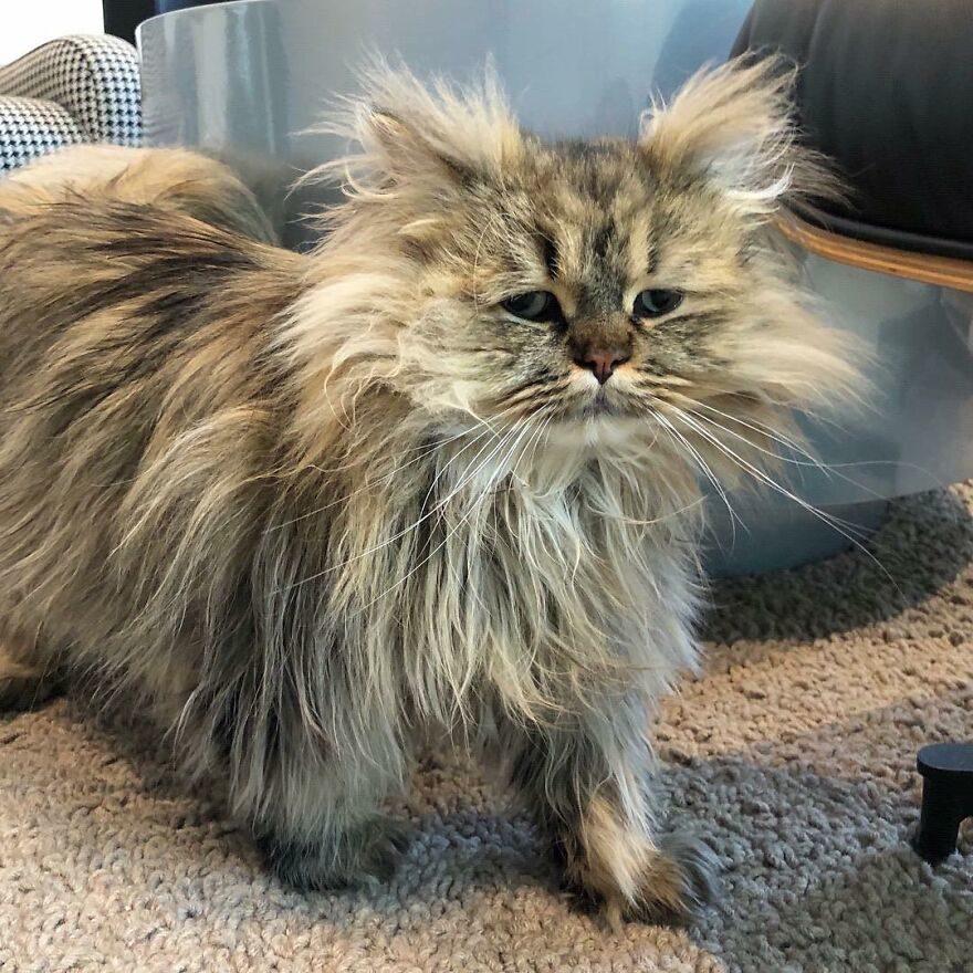 貓咪看起來總是睡不飽