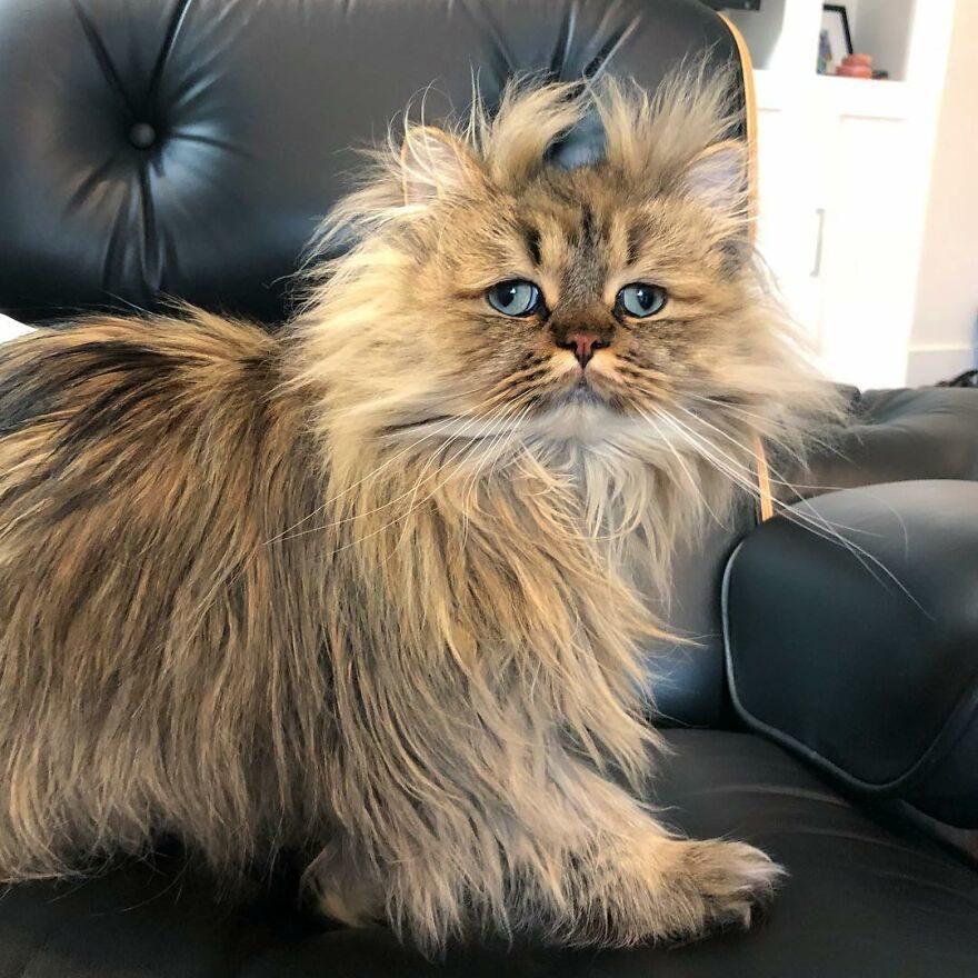猫咪看起来总是睡不饱
